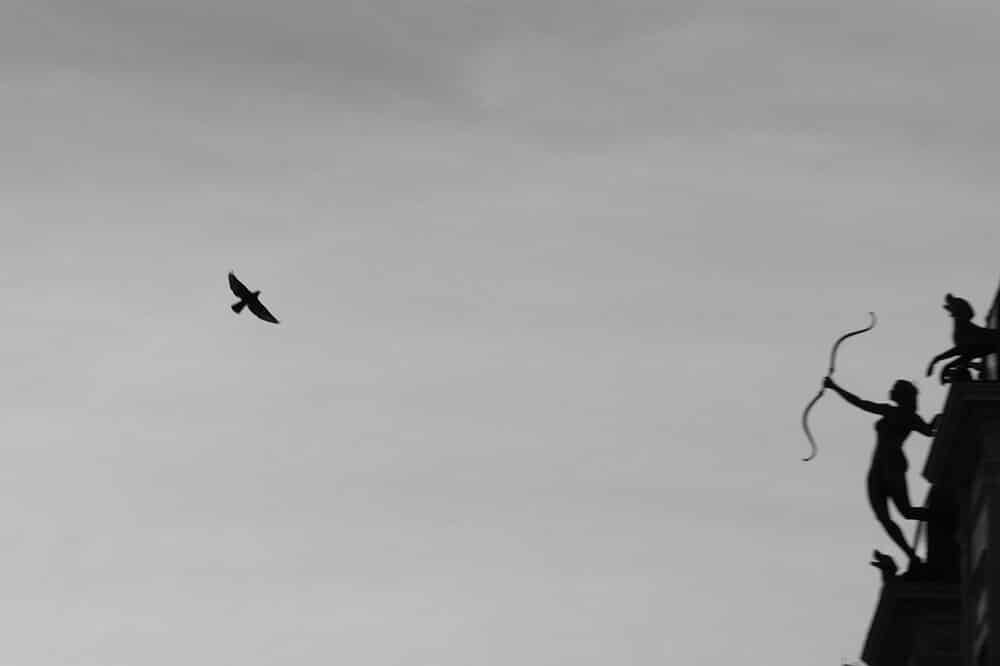 fotos-javier-aranburu-palomas